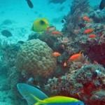 Scuba diving, Rolas Island
